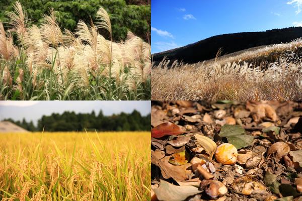 ススキや稲穂、木の実などの無料風景写真素材