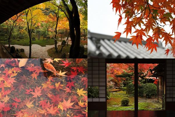 秋の日本庭園や寺、和室などの無料写真素材