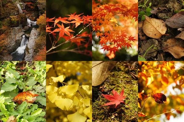 紅葉の滝や柿の葉、落ち葉などの無料写真素材