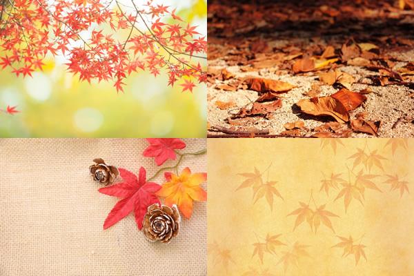 紅葉や落ち葉の画像やモミジのテクスチャ背景などの無料写真素材