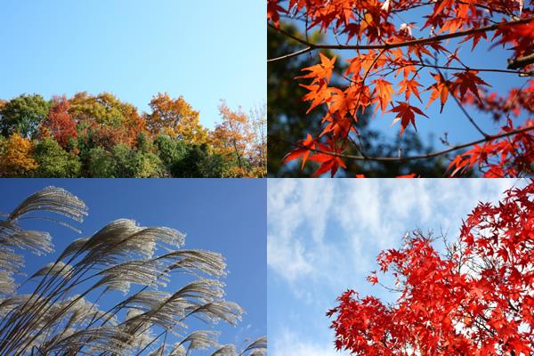 秋のフリー写真(somephoto)