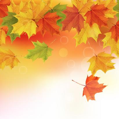 もみじの葉が舞い落ちる秋の紅葉背景