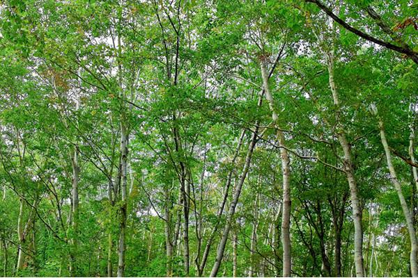 木の写真素材