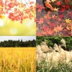 【商用無料/高解像度】秋の風景写真・紅葉(もみじ/イチョウ)の背景画像素材