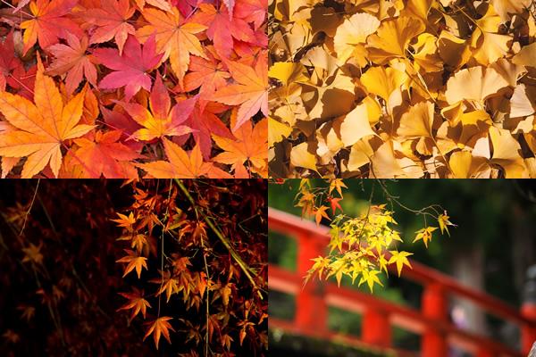 落ち葉やライトアップされた紅葉の無料写真素材