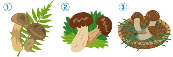 松茸(マツタケ)の無料イラスト