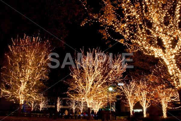 暗い夜空に街路樹のイルミネーションが際立つクリスマスの街並み